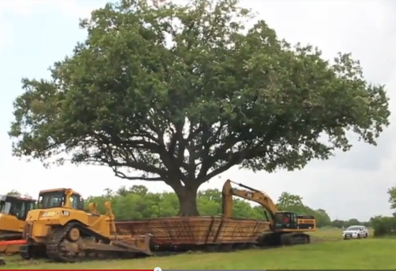 Speaking of Genius – Moving an Oak Tree!